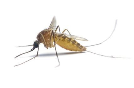 natürlicher Mückenschutz mit Aromatherapie